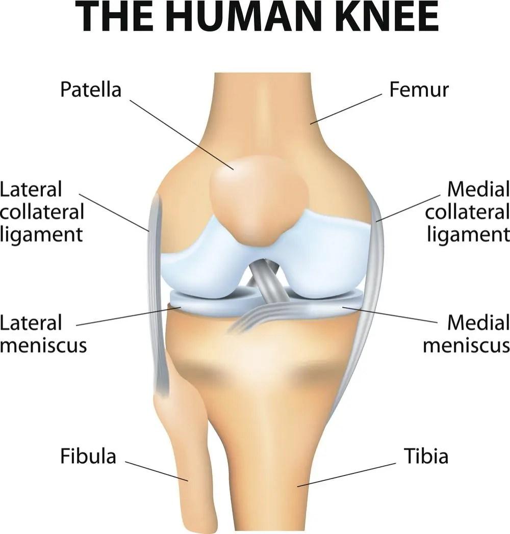 hight resolution of human knee diagram