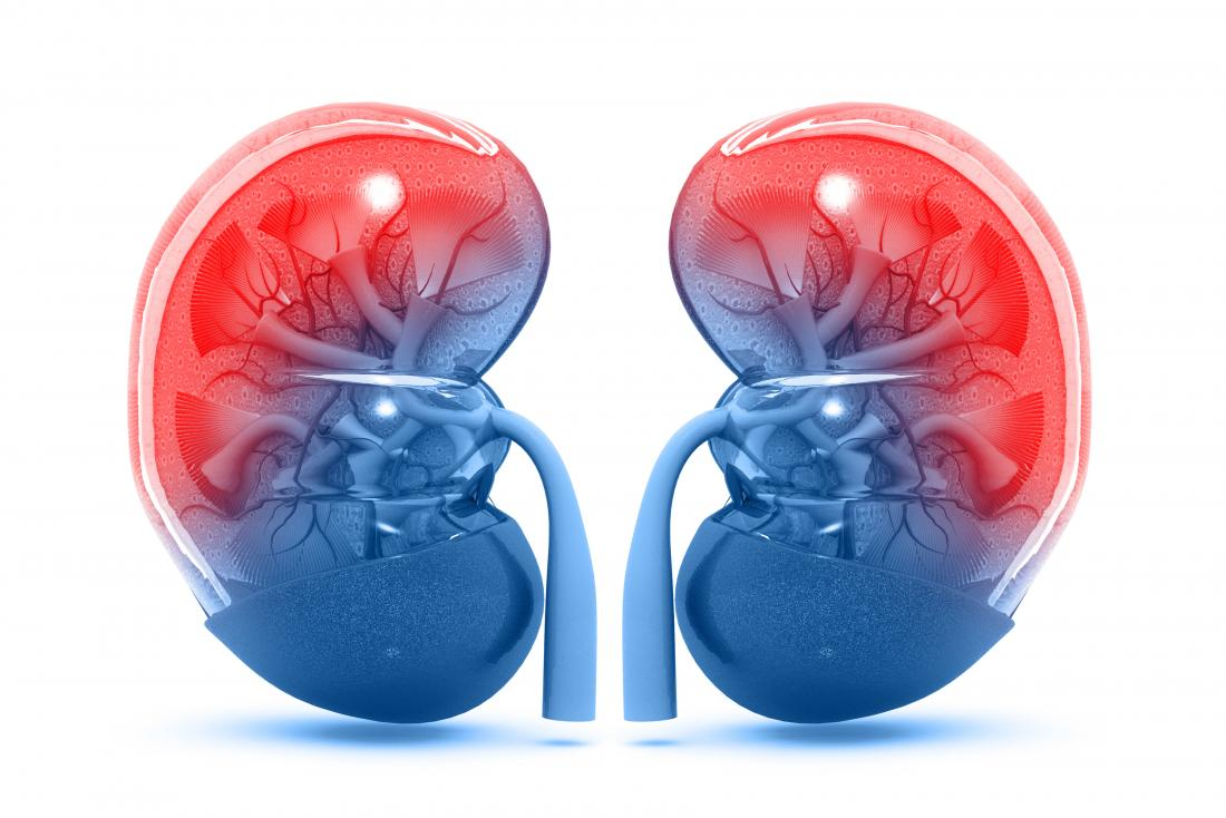 Kidneys  Structure  Function  And Diseases