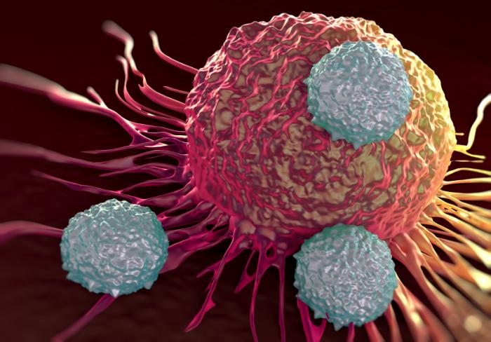 [Immune cells attacking cancer