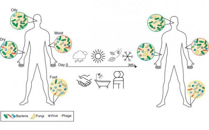 sites of skin microbes