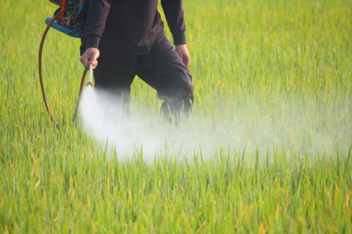 [A man spraying pesticide in a field]