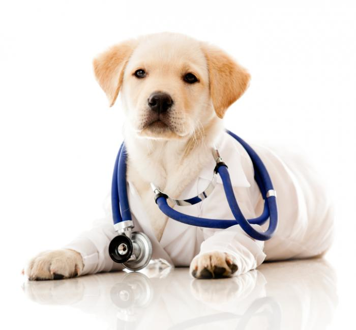 [A dog with a stethoscope]