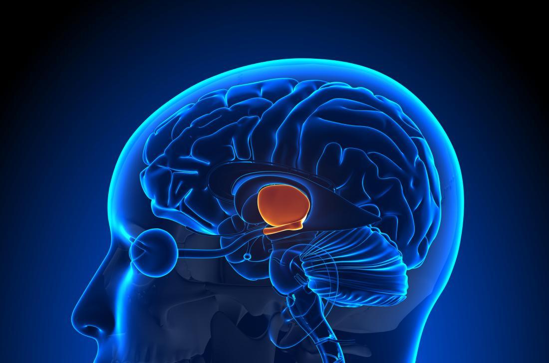 part brain sex drive