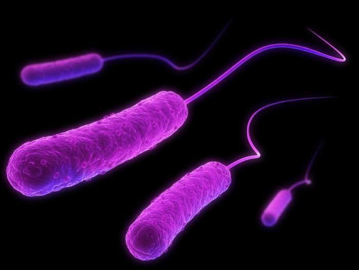[E.coli illustration]