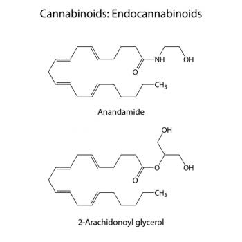 [endocannabinoids chemical structure]