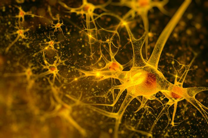 [An illustration of neurons]