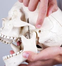 temporomandibular joint [ 1100 x 734 Pixel ]