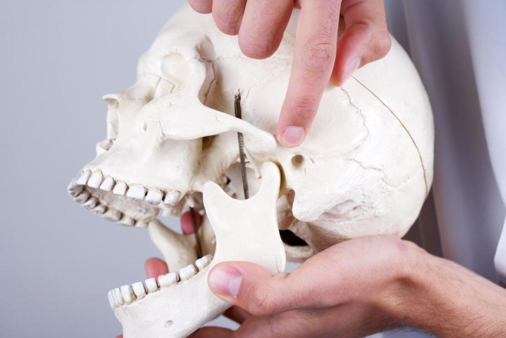 medium resolution of temporomandibular joint