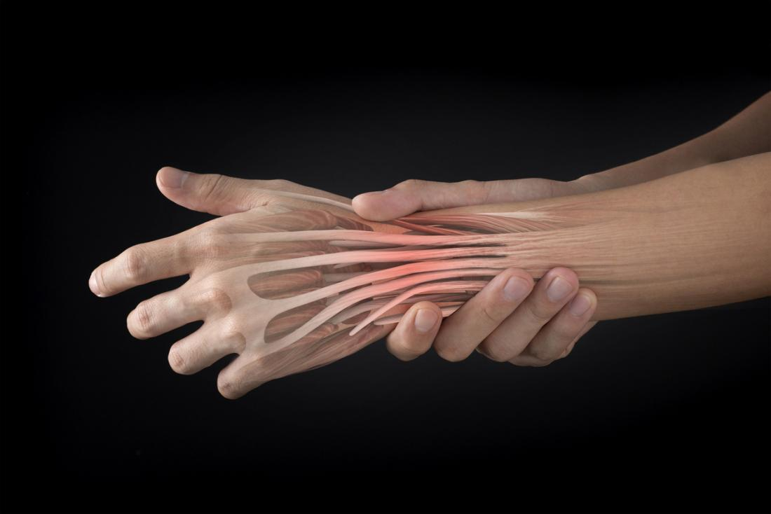 extensor tendons of the hand