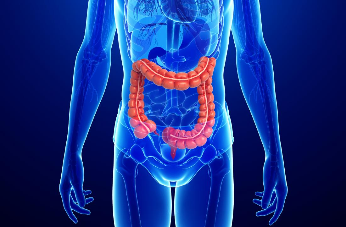 diagram of the colon