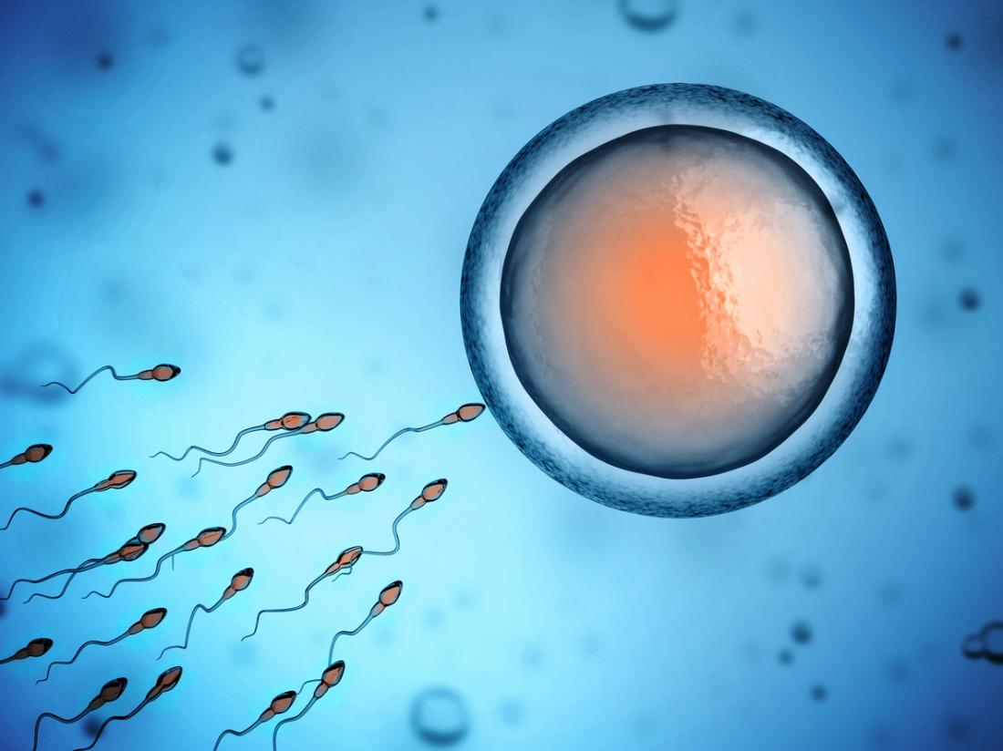 sperm swimming toward egg