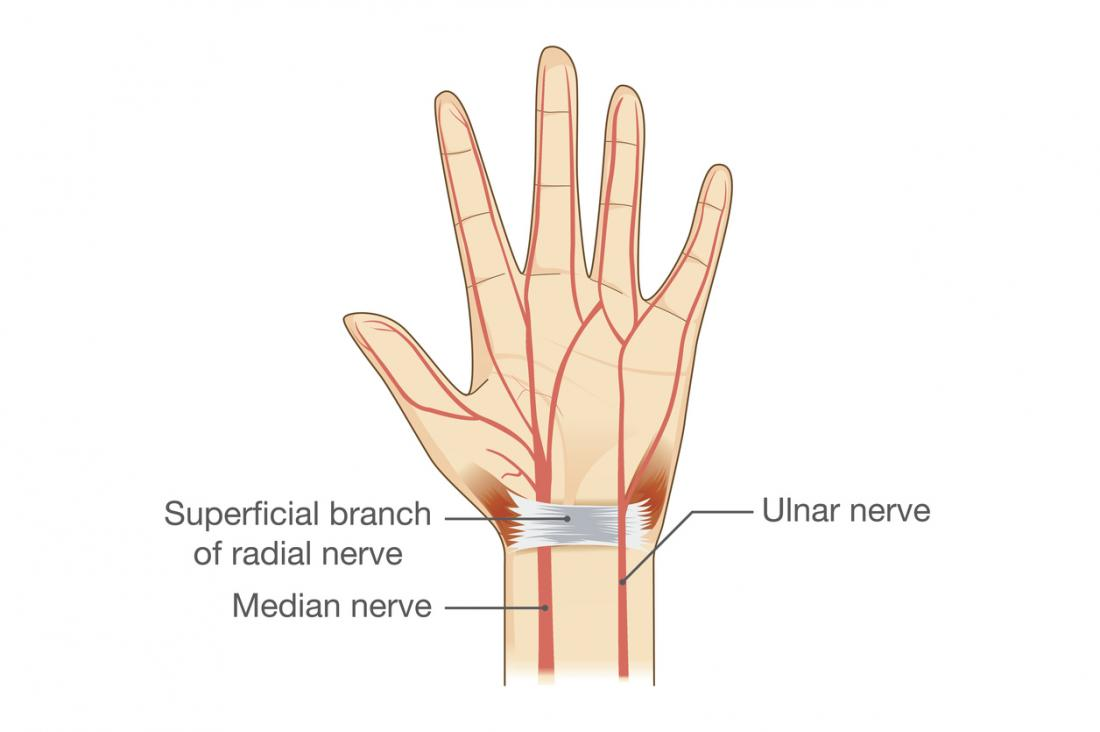 nerves in the hand