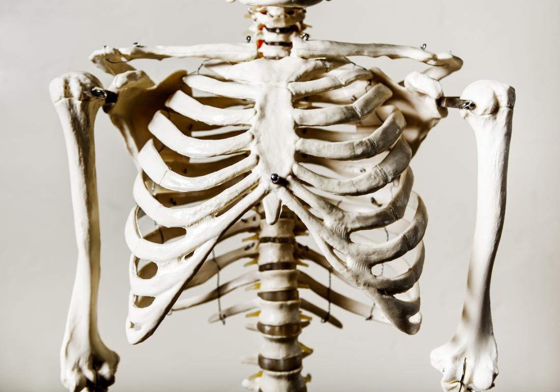 نموذج القفص الصدري