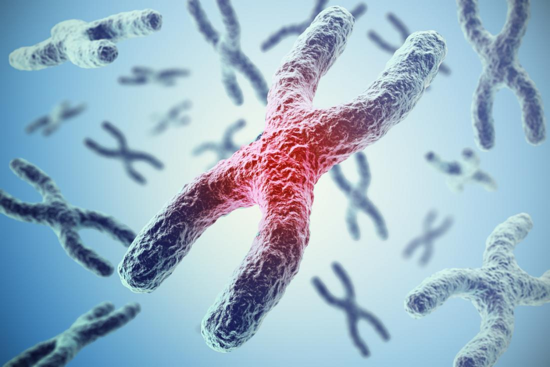 chromosome with telomeres