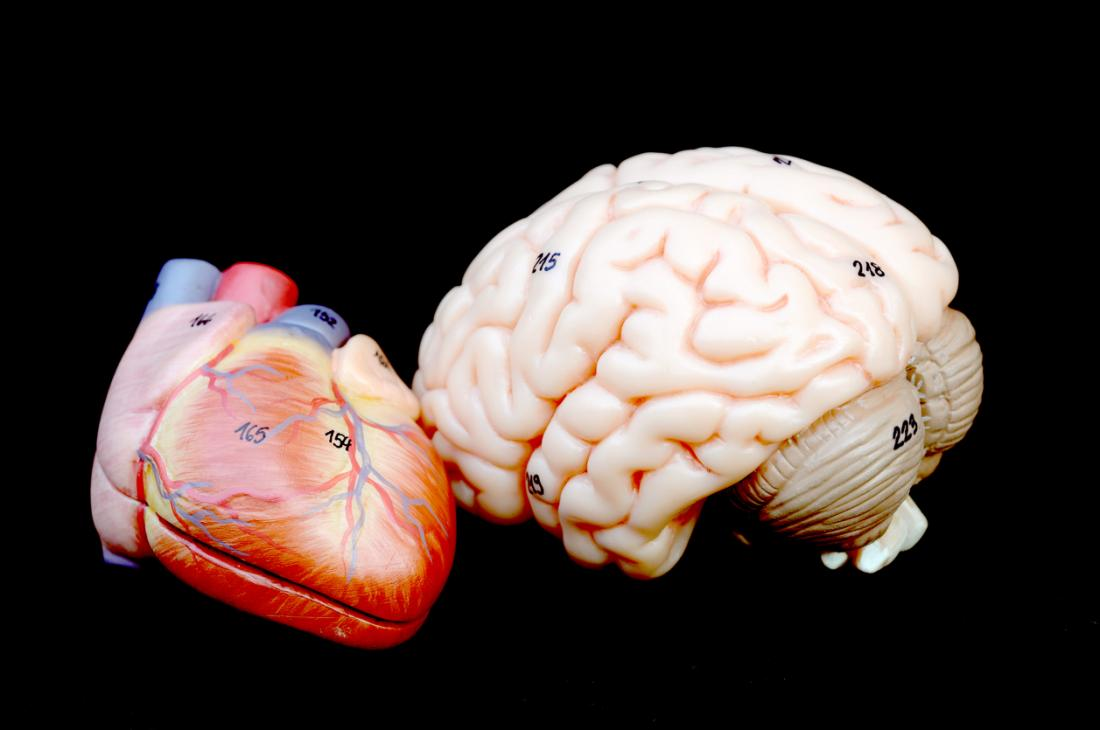 Brain and heart model