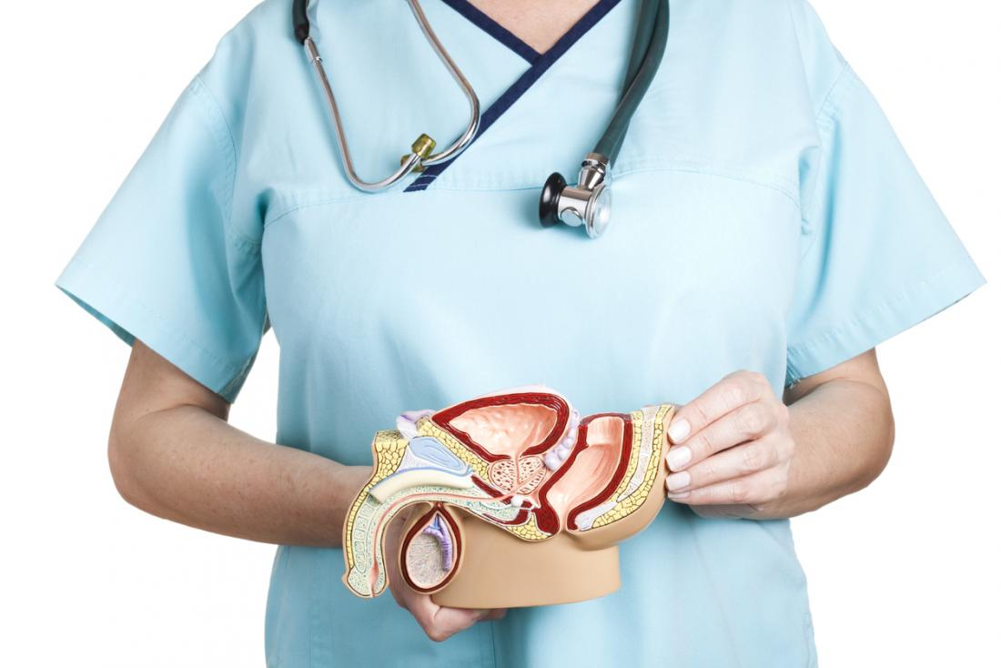 Nurse holding anatomical model of male reproductive system.