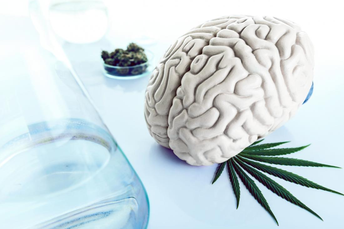 marijuana and the human brain