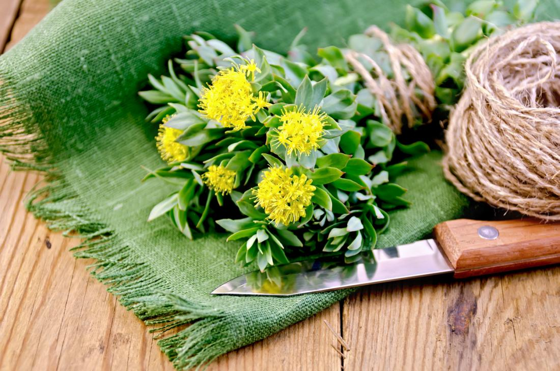 Rhodiola rosea flowering herb on a board