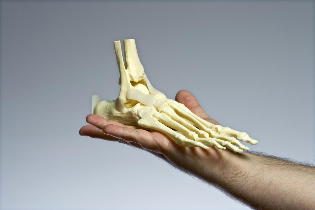 Model of bones in the feet being held up.