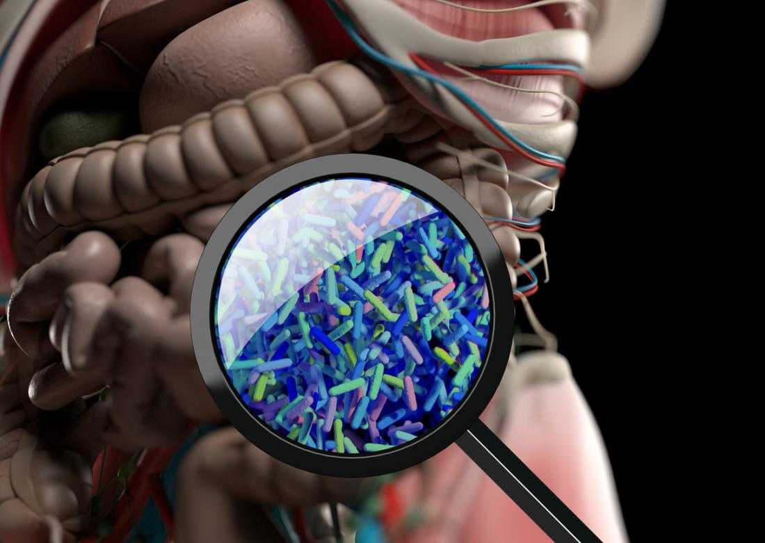 gut bacteria through magnifying glass