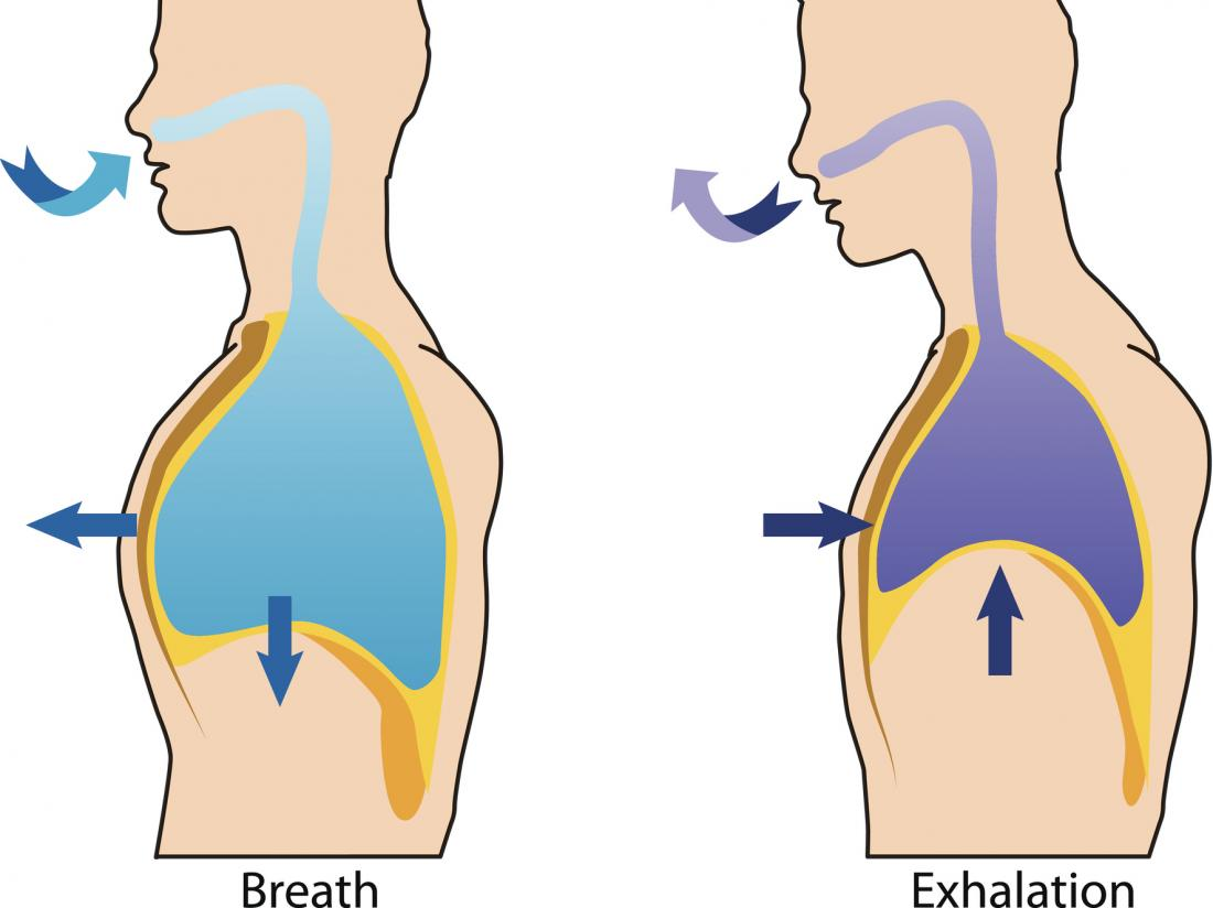 diagram of breathing and exhalation