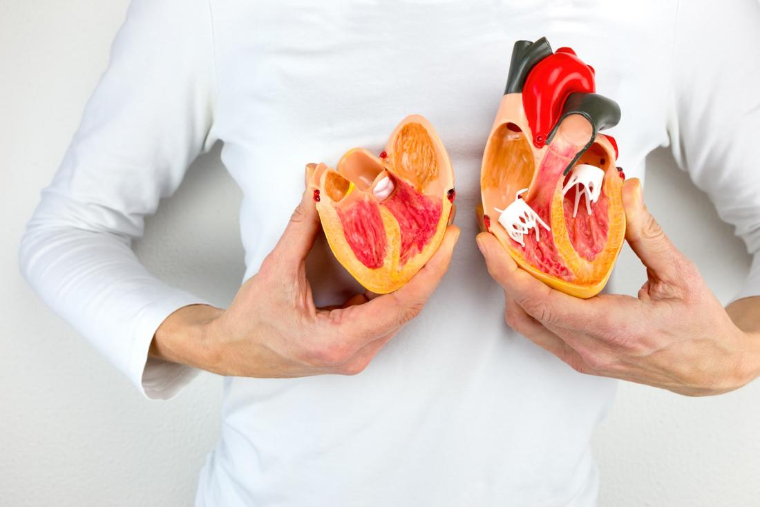 Woman holding up to halves of a model of the human heart in front of her chest.