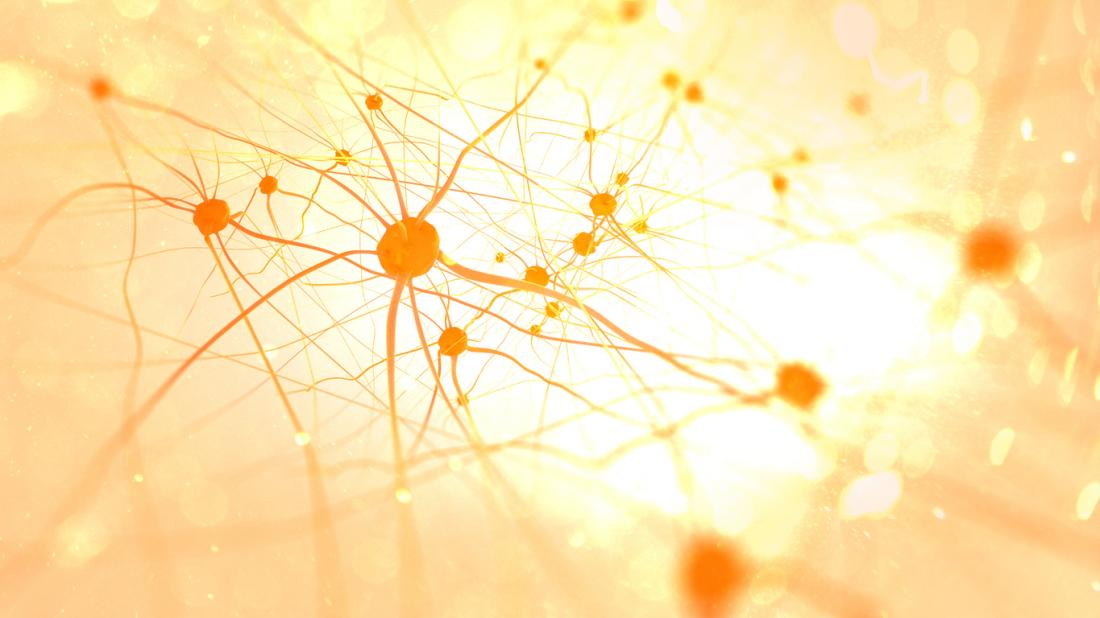 light colored neurons