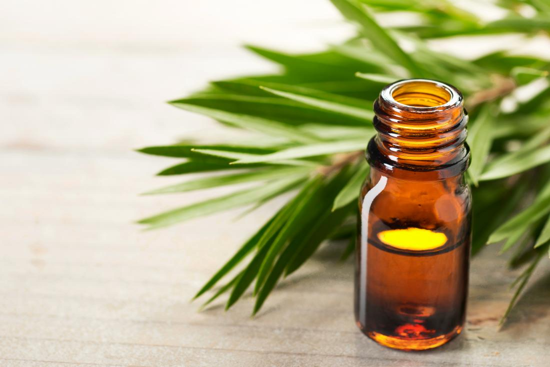 Tea tree oil in bottle with tea tree leaves.