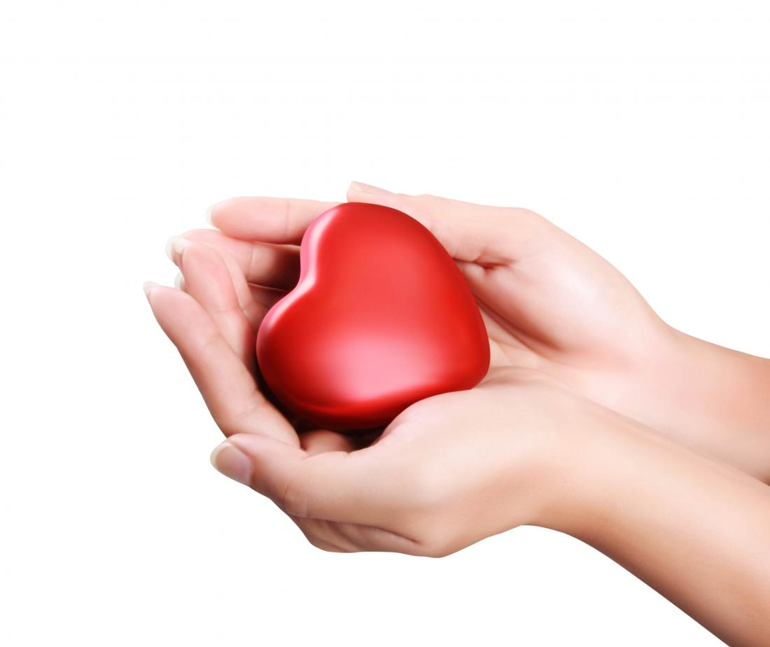model of heart being held in hands