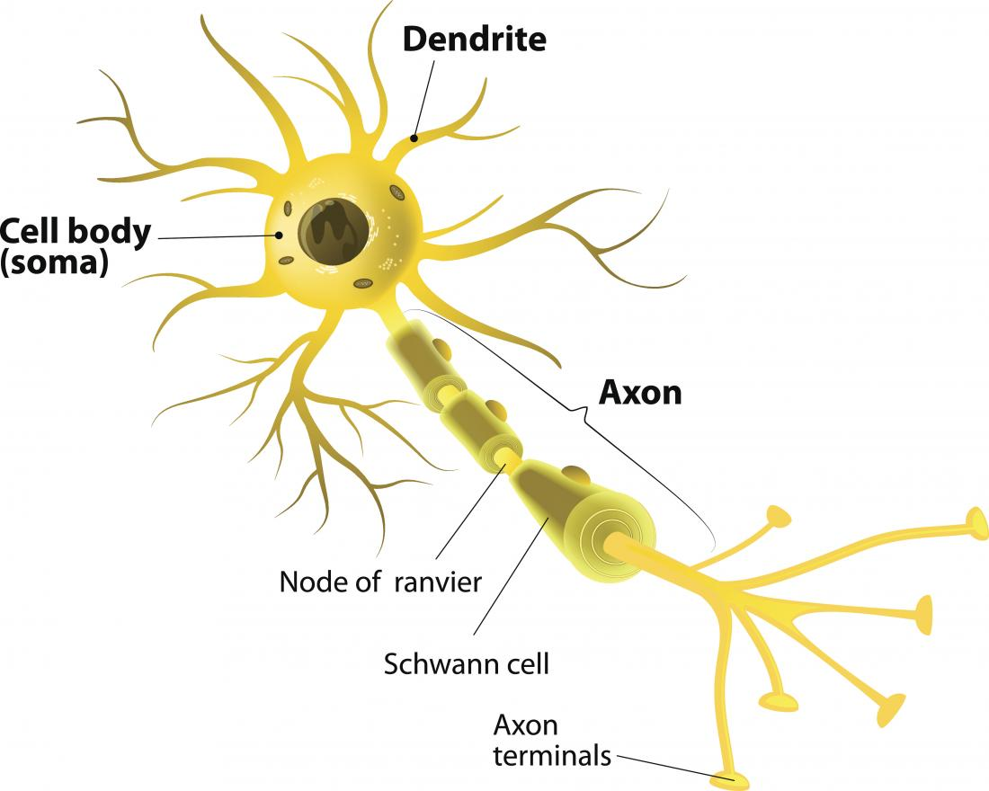 Neuron diagram