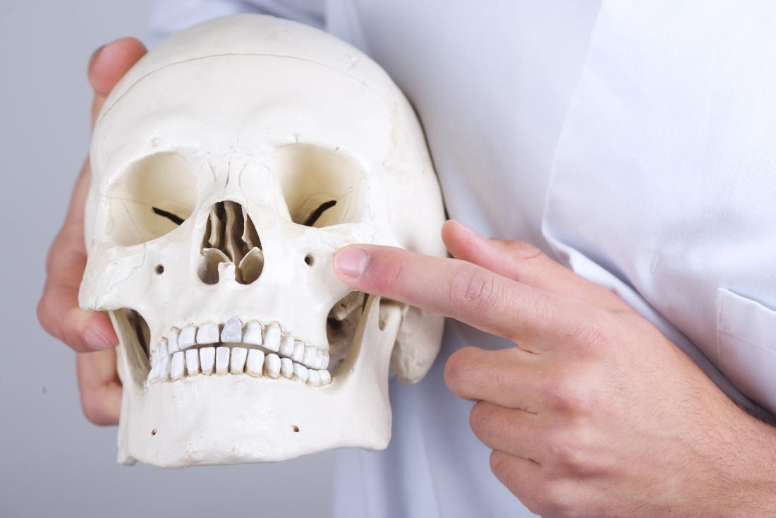 Doctor pointing at model of a human skull to explain symptoms of Treacher Collins syndrome.