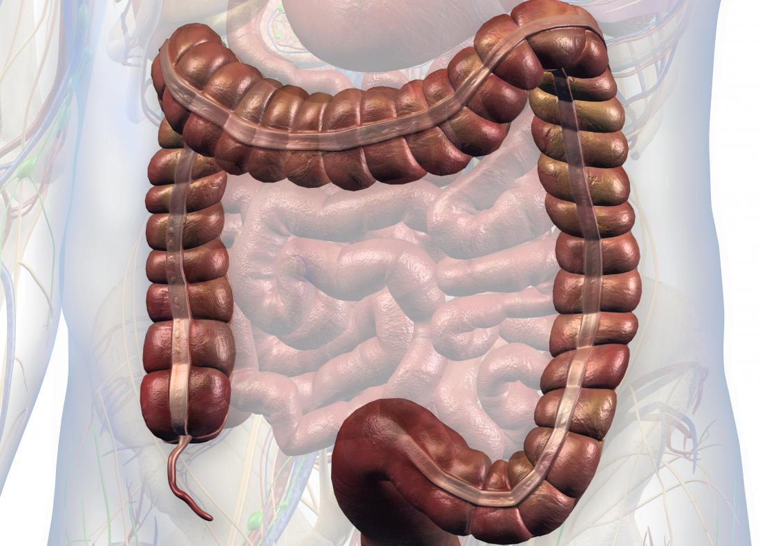 Image of intestines with appendix