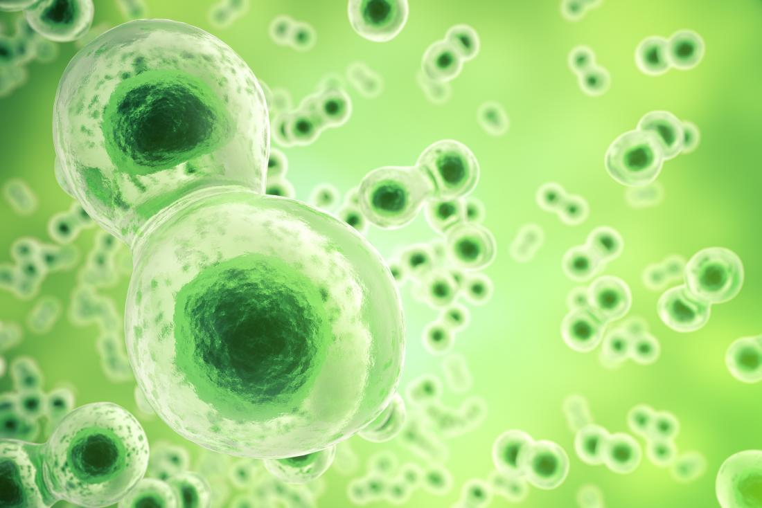 cells on green background