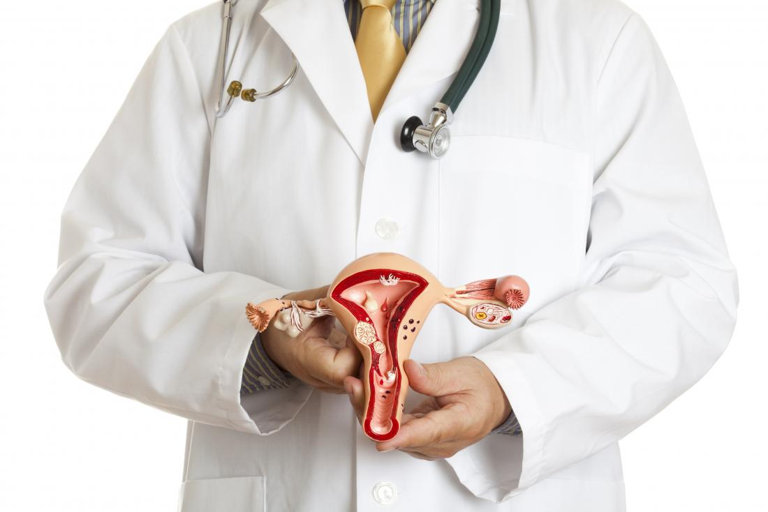 medic holding model of uterus and ovaries