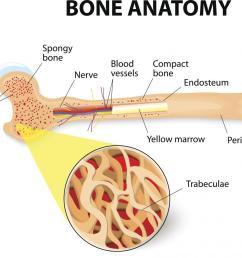 the structure of bones bone anatomy [ 1100 x 916 Pixel ]