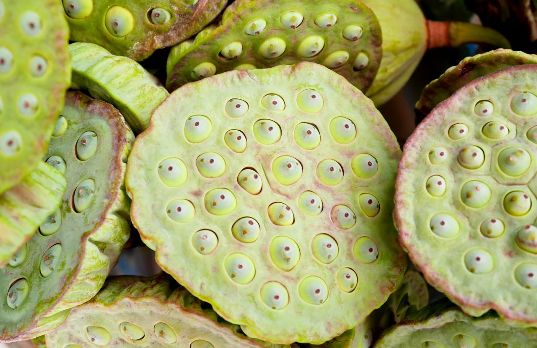 lotus seed heads, which may cause trypophobia