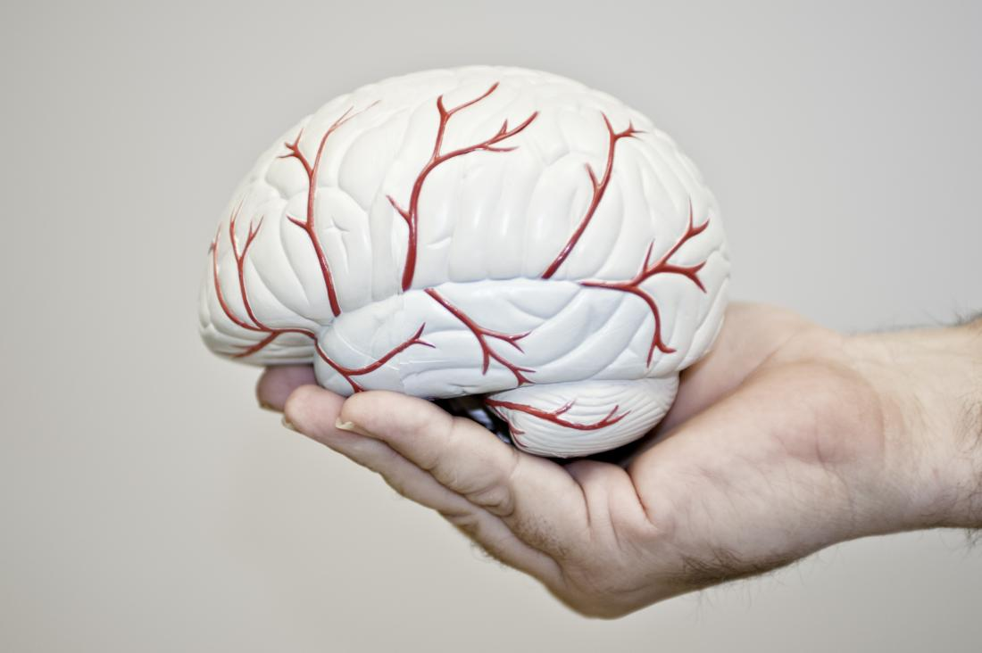 Person holding model of brain with blood vessels to demonstrate anoxia.