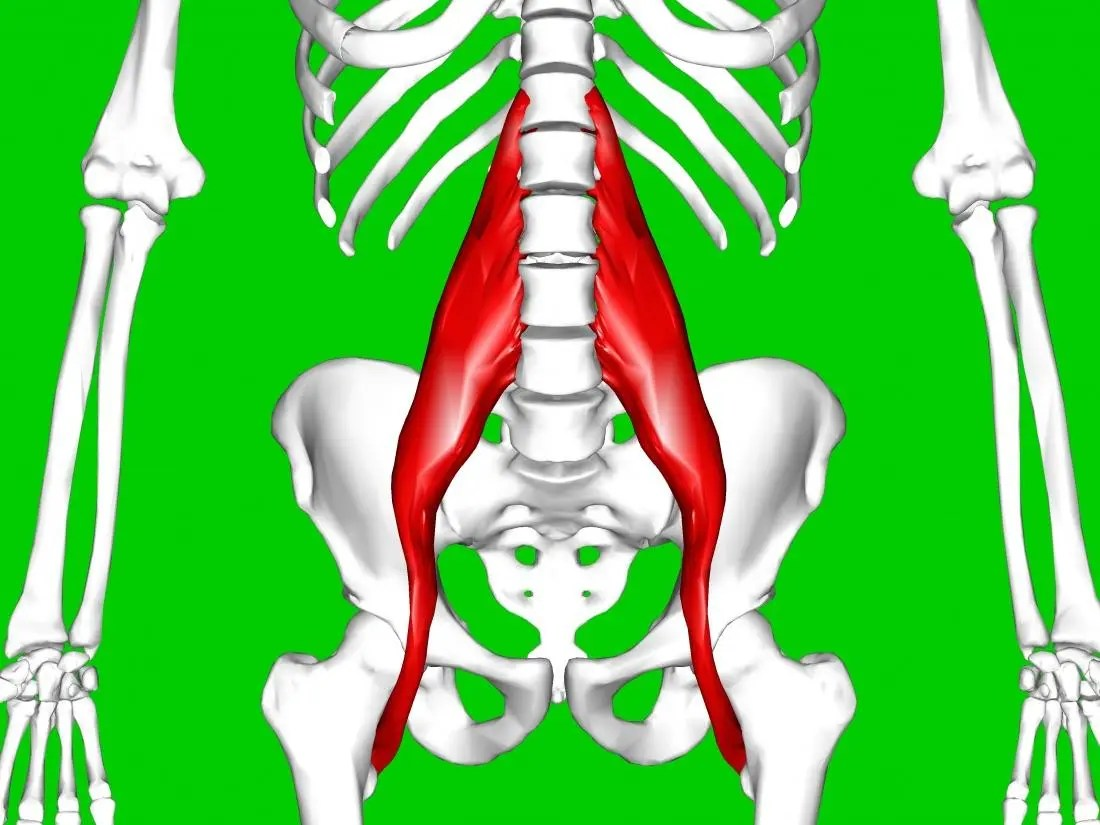 the psoas muscle is part of the hip flexor muscles that can be strained br image credit anatomography 2013 br