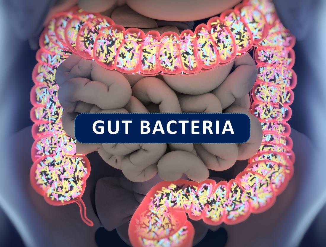 illustration of gut bacteria