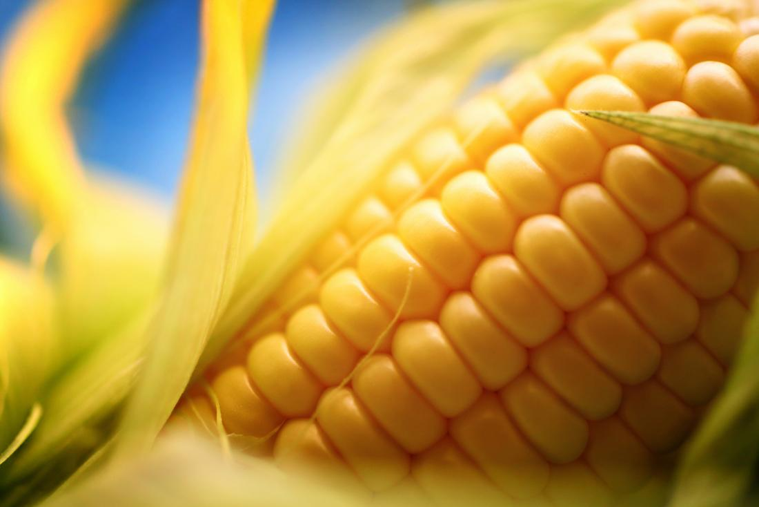 close up image of corn on the cob which may cause white specks in stool