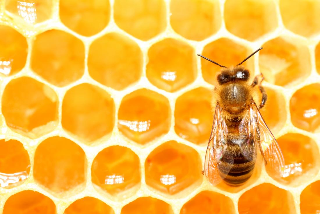 Honey Bees May Help To Explain How Humans Make Decisions