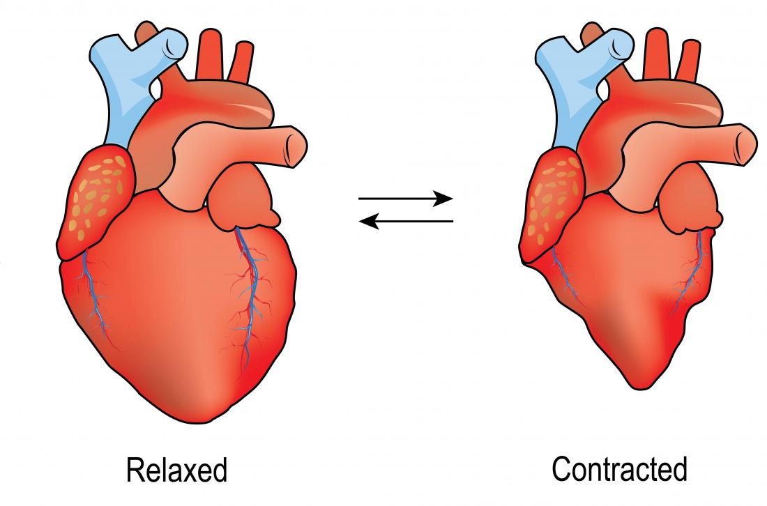 Diagram of a heart relaxing and contracting. Diastole vs systole