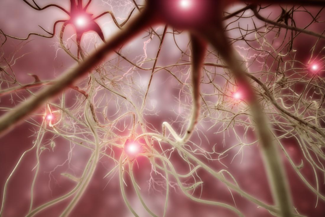 an illustration of nerve cells