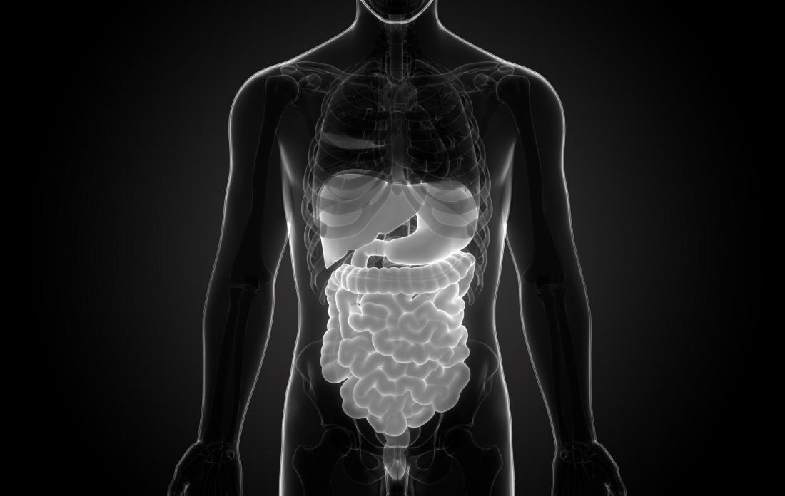 illustration of gastrointestinal tract