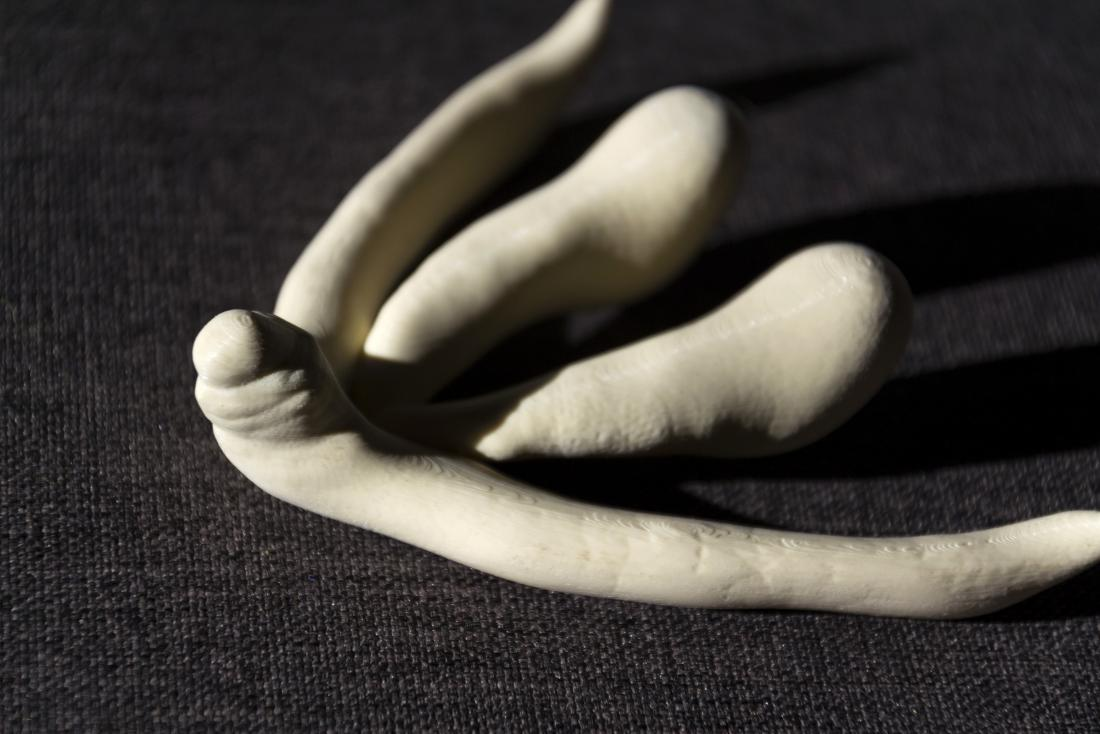 3d printed model of the clitoris