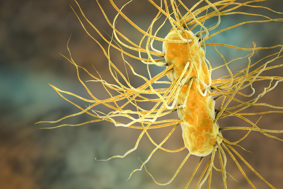 대장균 (Escherichia coli bacterium)