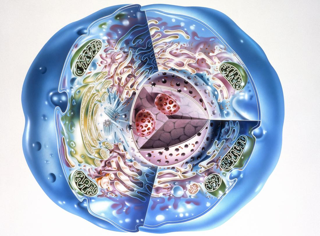 Cell illustration