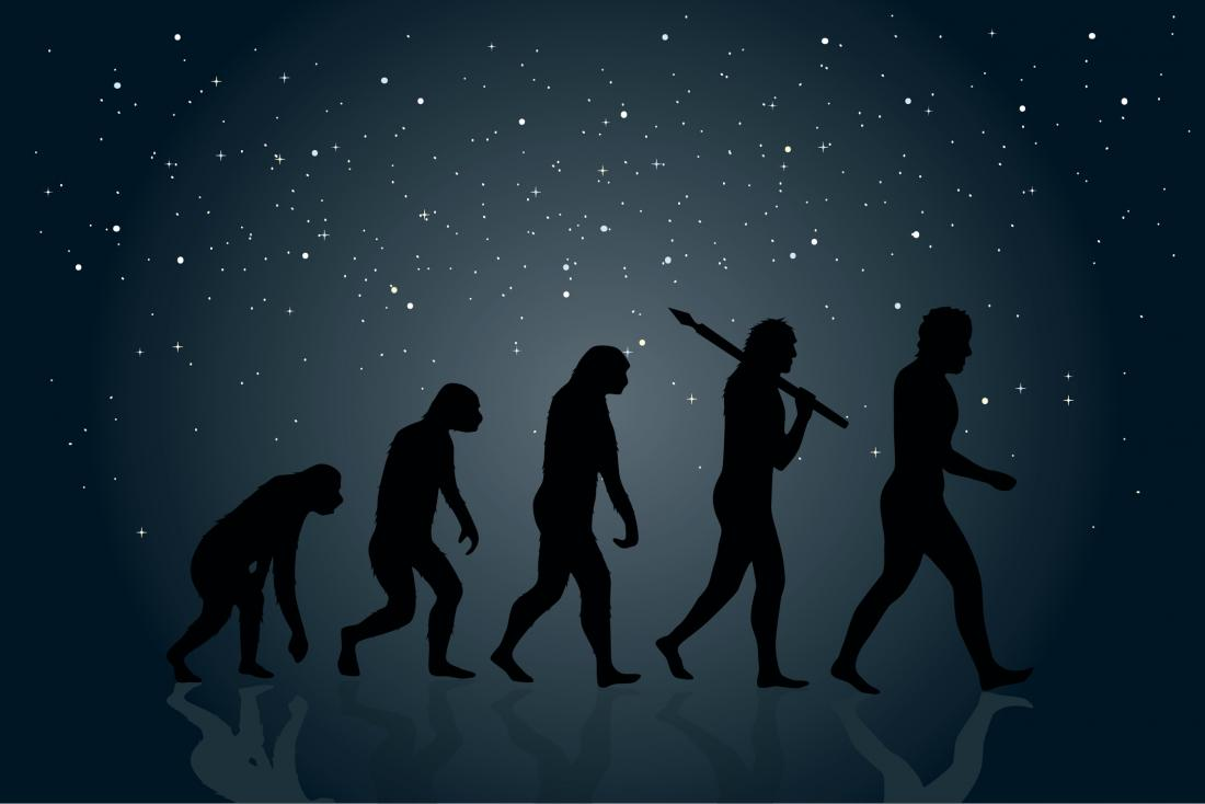 illustration of human evolution