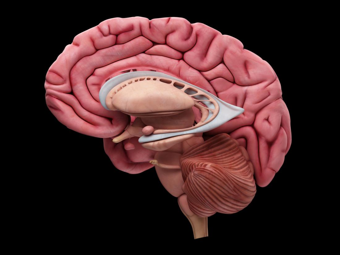 illustration of a brain section