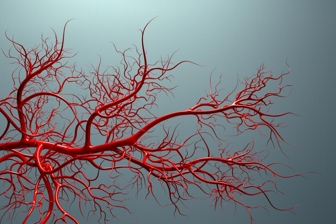 Fasting-induced anti-aging molecule keeps blood vessels young